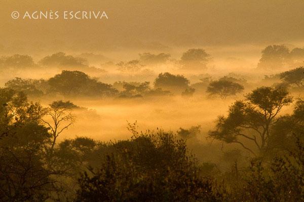 Estampe africaine - sélection finale Concours Canon 2010 de Namur et 8ème prix catégorie Paysage au concours Terre Sauvage 2010 - Afrique du Sud mai 2010
