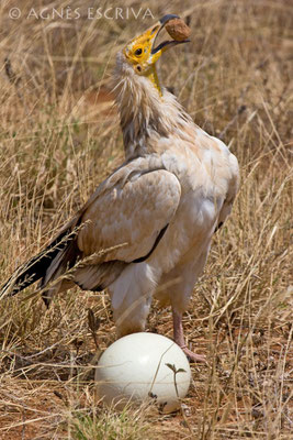 Samburu - Kenya 2008