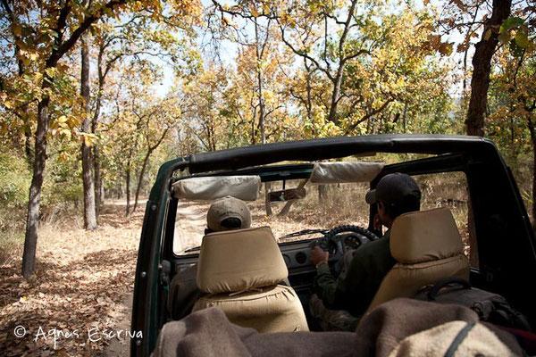 Intérieur jeep - Bandhavgarh, février 2010