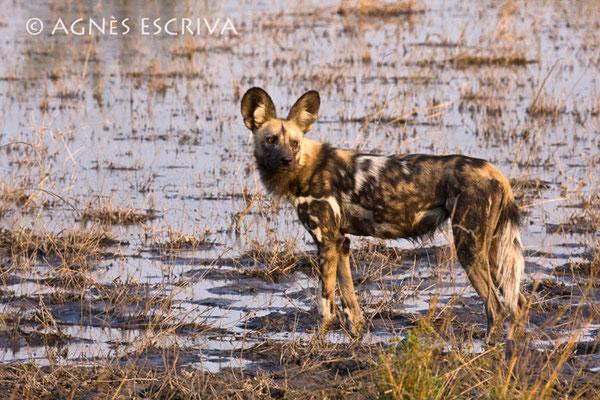 Botswana - 2008