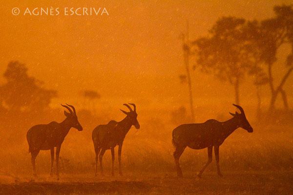3 topis - Kenya août 2010