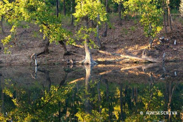 La forêt, Bandhavgarh