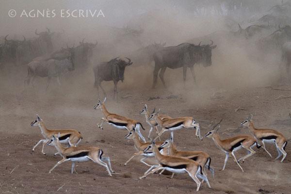 Chassé croisé 2 - Kenya août 2010