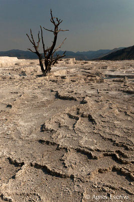 Mammoth hot springs, Parc du Yellowstone