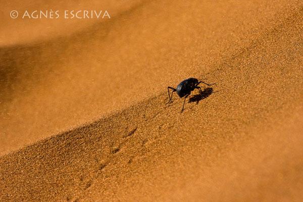 Vent de sable - 5ème prix Concours Afrique Terre de Couleurs 2009 - Namibie 2008