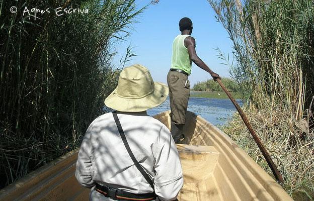 Marais de Bangweulu - Zambie mai 2006