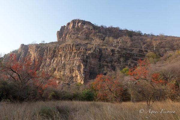Plaine et falaise, Ranthambore