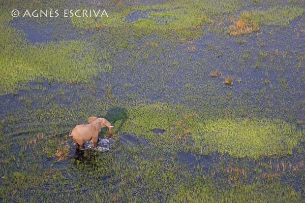 Ronds dans l'eau - Botswana 2007