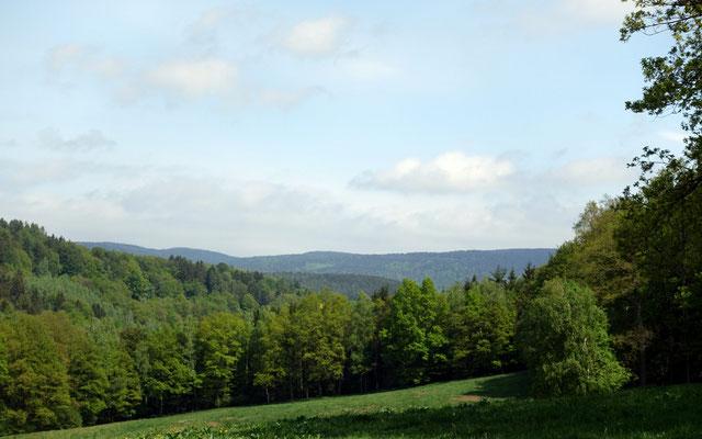 Viel Grün- Blick über besonders geschützte alte Wälder und Wiesen