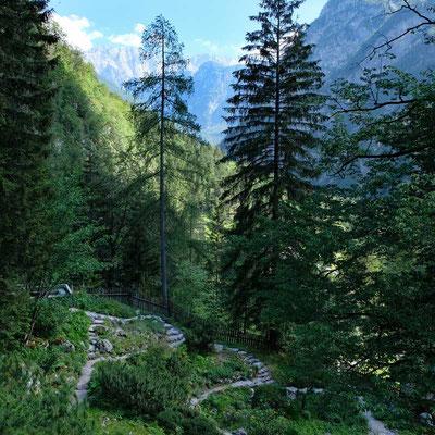 Botanische Garten Alpinum Juliana Trenta Soca-Tal
