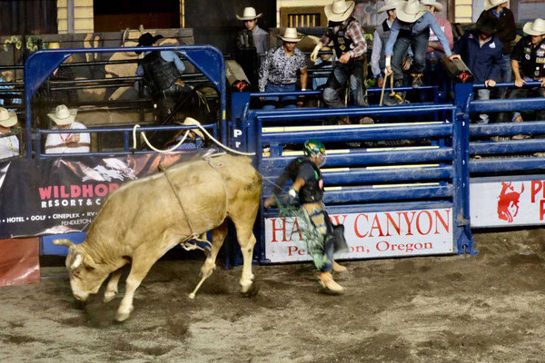 Profi Bull Rider im Happy Canyon Pendleton