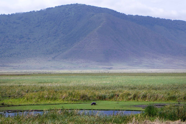Sattes Grün finden wir im November im Ngorongoro Krater vor