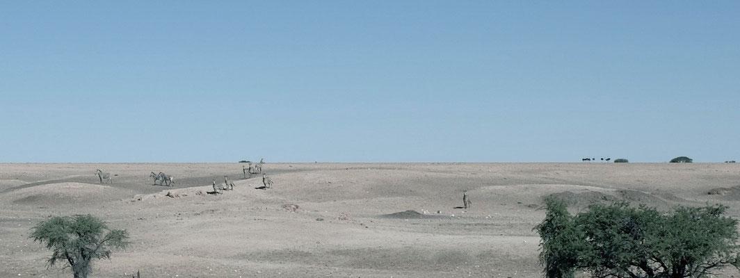 Wasserloch Hotsas, nördliche Namib
