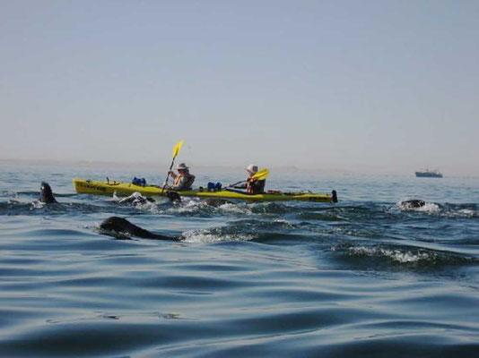 Kayak Tours Swakopmund Walvis Bay Namibia