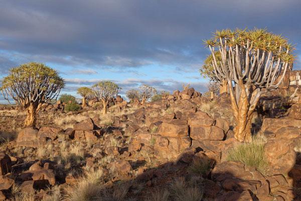 Köcherbaumwald Mesosaurus Fossil Site, Namibia
