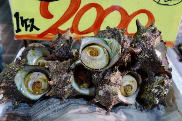 Meeresschnecken –Tore-tore Seafood Market Shirahama