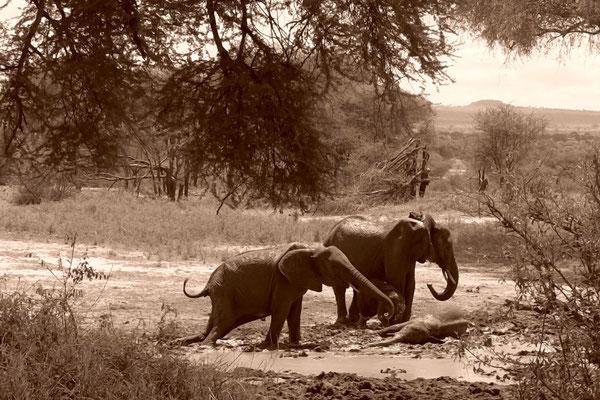 Tansania Tarangire National Park