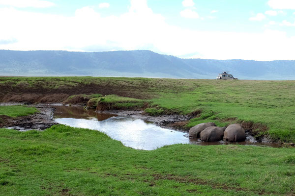 Hippos im Ngorongoro Crater National Park