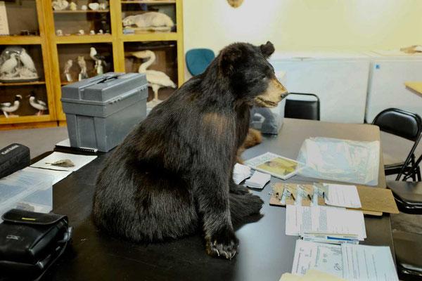 Draper Naturkundemuseum Abteilung für Tierpräparationen