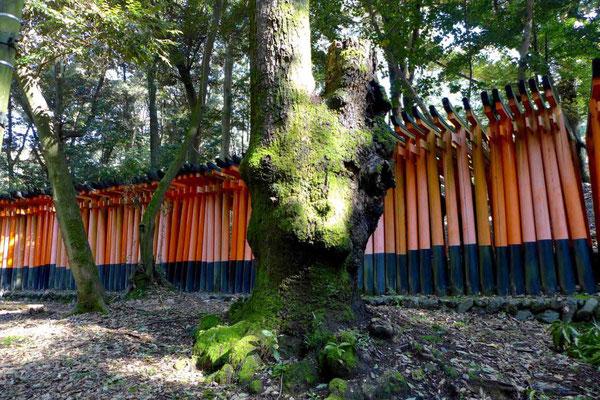 Fushimi Inari Torii südlich von Kyoto