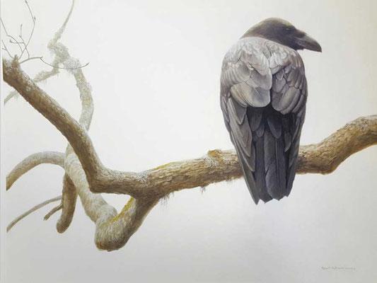Robert Bateman Prints | Lone Raven National Museum of Wildlife Art in Jackson