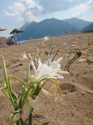 Cirali Strand im Hintergrund antike Stadt Olympos