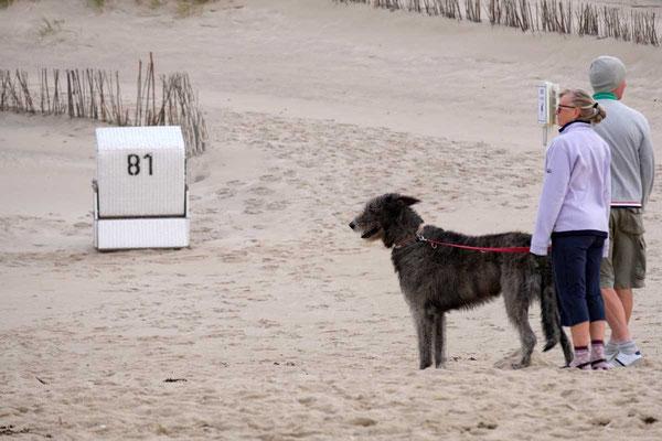 Hundestrand auf Sylt
