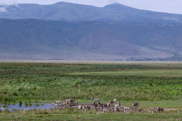 Garten Eden im Krater Ngorongoro