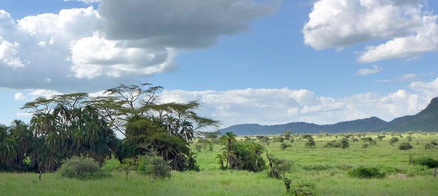 Bilderbuch-Landschaften Serengeti Tansania