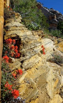 Frühjahr am Observation Point Trail, Zion NP Wanderung