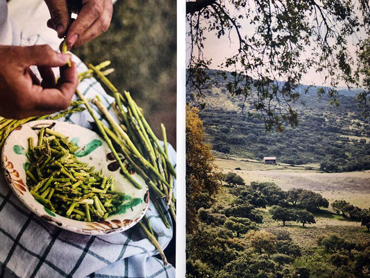 José Pizarro Andalusien: Das Kochbuch