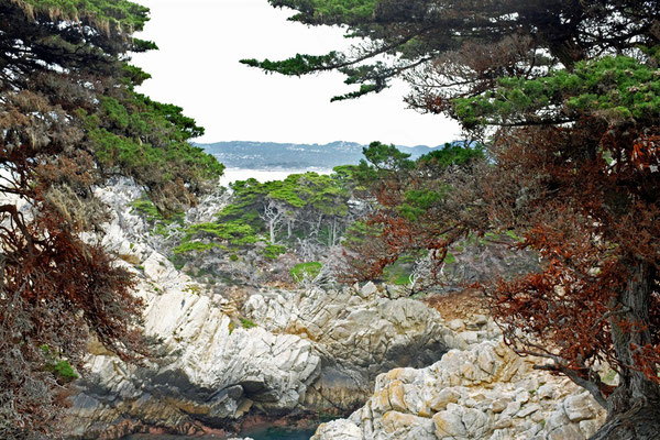 Point Lobos State Reserve Cypress Grove Trail