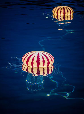 Medusa Meereslichter am Hotel Bellevue Losinj