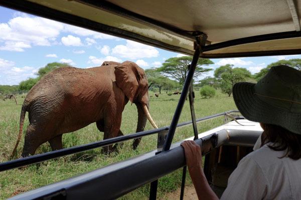 Elefanten lieben den Tarangire National Park