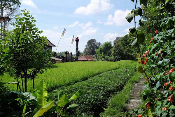 Das ländliche Ubud