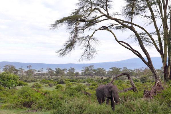Leira Forest Ngorongoro Crater Tanzania