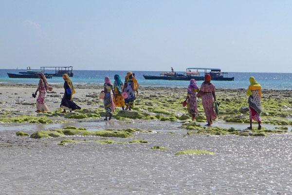 Die Dorfbewohnerinnen, zur Ebbe immer unterwegs