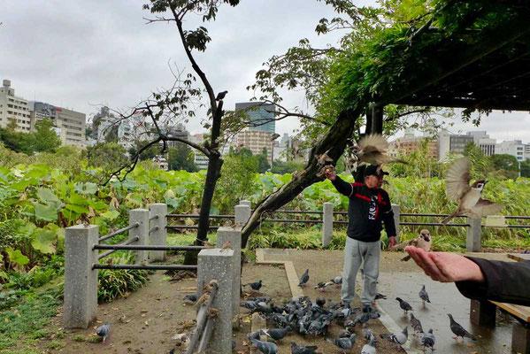 Vogelfütterung im Ueno Park Tokio