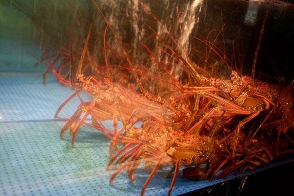 Langusten im Tore-tore Seafood Market Japan
