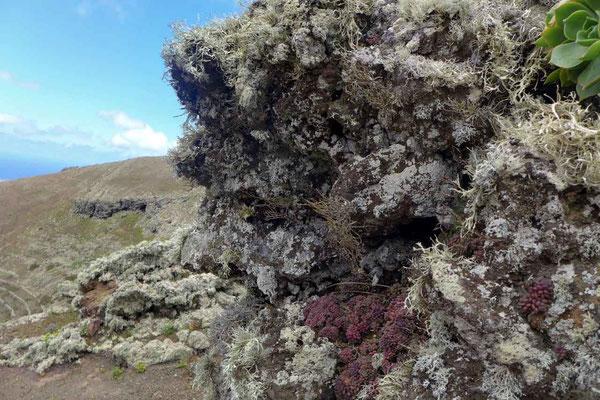 Vulkan-Flora auf dem Los Helechos – Vulkankrater Wanderung Lanzarote
