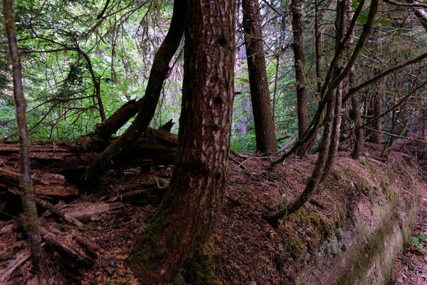 Grove of the Patriarchs Trail - Mount Rainier National Park