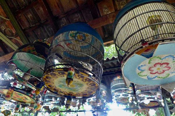 Pasthy Love Bird Market Yogyakarta