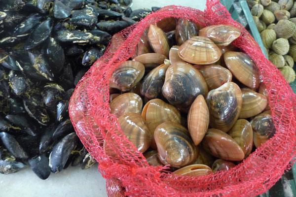 Meeresfrüchte aus der Fischhalle in Zadar