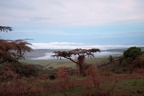 Anfaht zum Ngorongoro Crater zum Sonnenaufgang MorgengrauenGate Tanzania Safari