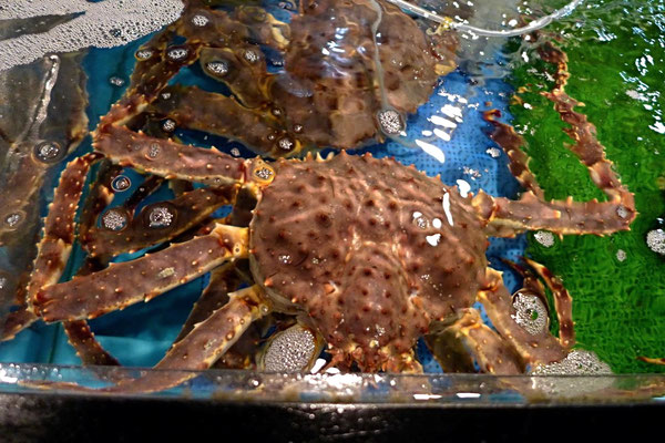 Meeresspinnen – Tore-tore Japans größter Seafood Market in Shirahama