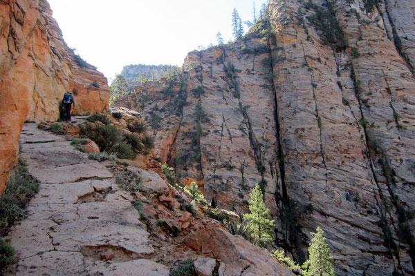 Wanderung Observation Point, Zion NP