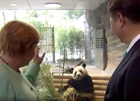 Geschichte Pandas aus China