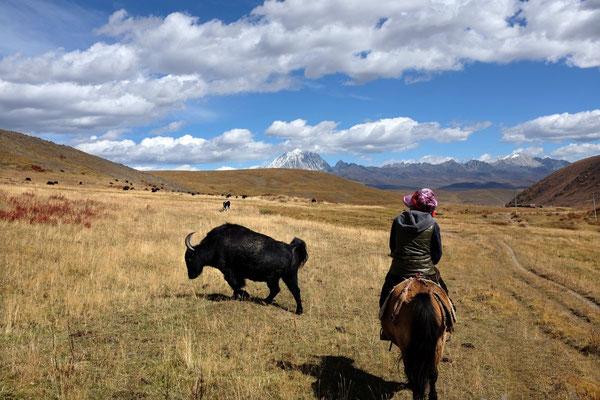 Horse Trek Tour in Tagong