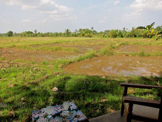 Blick von der Terrasse,  Rice Villa bei Polonnaruwa Sri Lanka