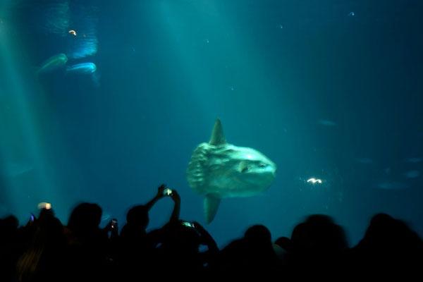 Outer Bay Aquarium zur Fütterung, Monterey Bay Aquarium